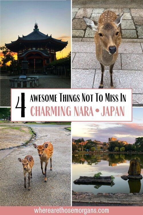 4 Awesome things not to miss in charming Nara Japan day trip from Osaka or Kyoto