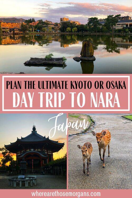 Plan the ultimate Kyoto or Osaka day trip to nara Japan