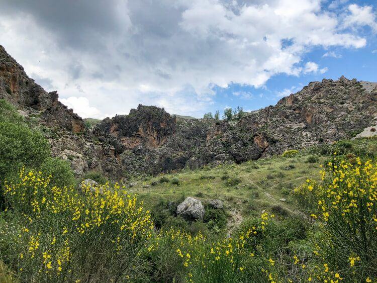 Pretty yellow flowers in Sierra Nevada mountain range
