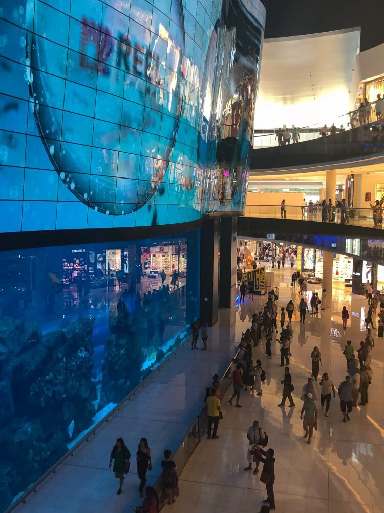 The aquarium in the Dubai mall with sharks and fish