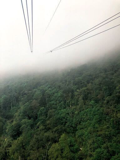 Cable car lines over dense green trees disappearing into thick clouds