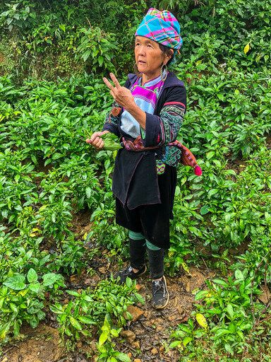 sapa guide with indigo plant