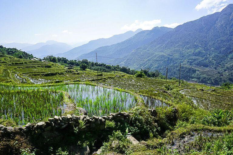 deep green rice plants reflecting in pool of water in sapa vietnam
