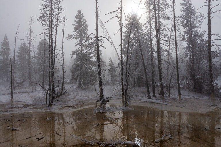 Yellowstone dead trees in eerie mist with sun blocked