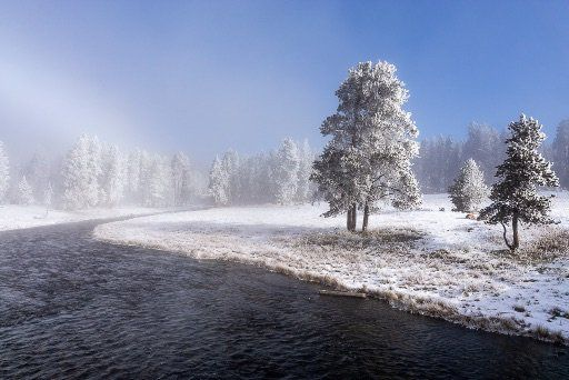Frozen trees along riverbank in snow Yellowstone national park 4 days itinerary