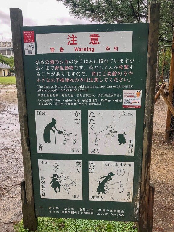 Avoid being injured by deer at Nara park follow the instructions!