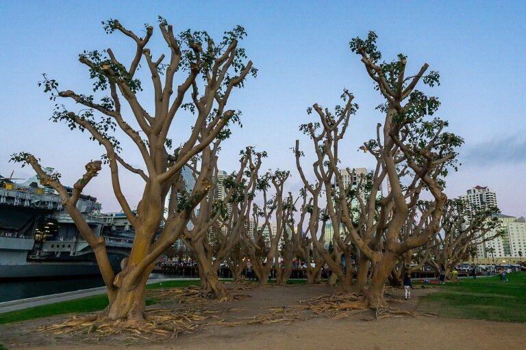 Joshua Trees next to USS Midway