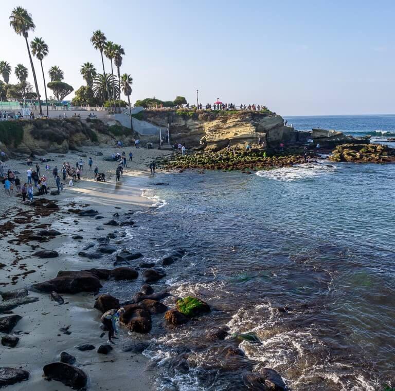 La Jolla Cove seals and sealions