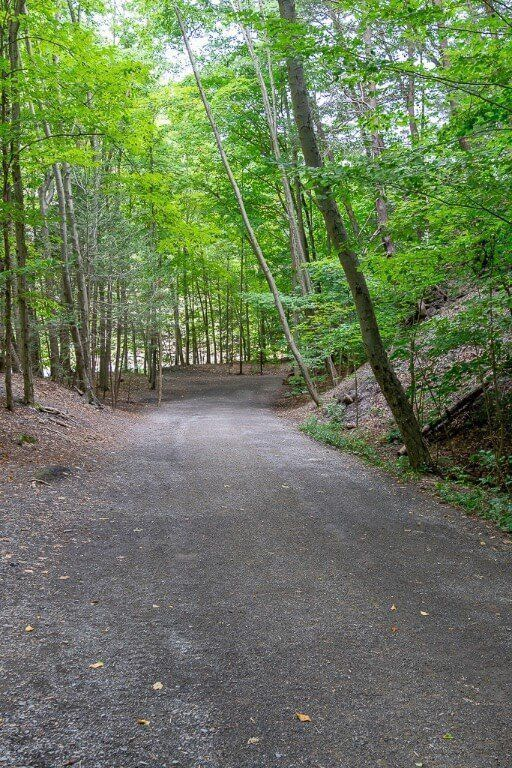 Forest path alongside gorge in finger lakes New York