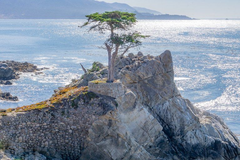 Lone Cypress Tree on 17 mile drive in Monterey Bay near pebble beach golf club