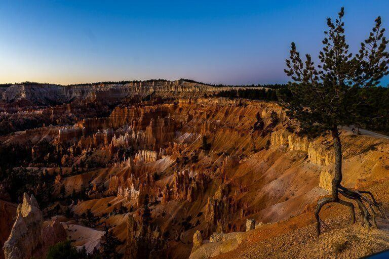Amazing blues and purples of civil twilight just before sunrise over bryce canyon amphitheater with tree and exposed roots