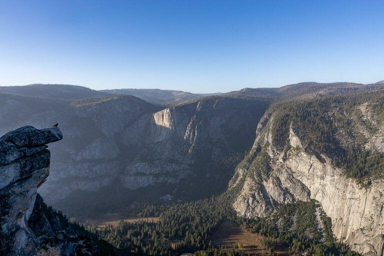 Bird perched on a ledge towering over impressive yosemite valley below