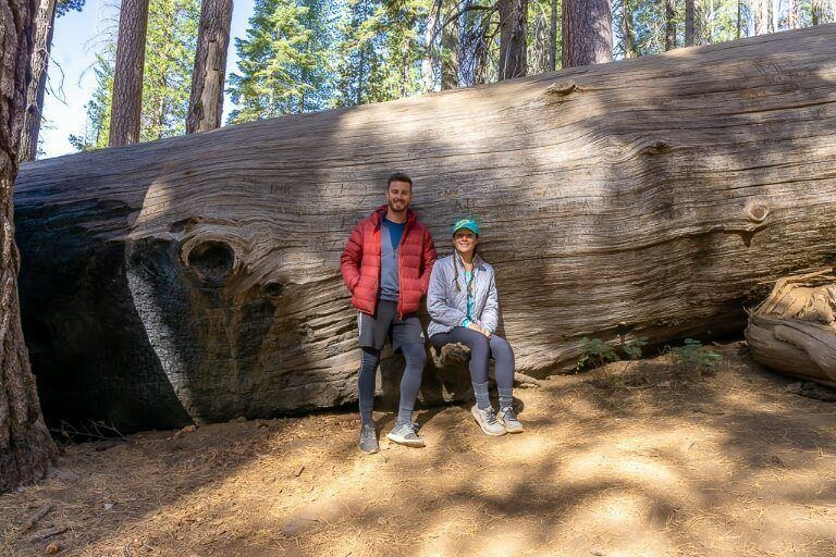 Mark and Kristen stood next to a fallen giant sequoia tree to show perspective of its girth