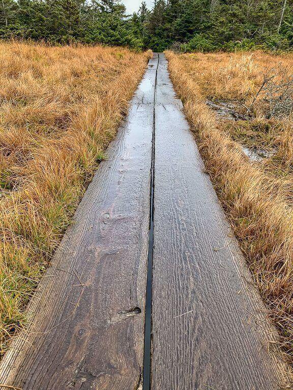 Wooden walkway boards through yellow wet grass