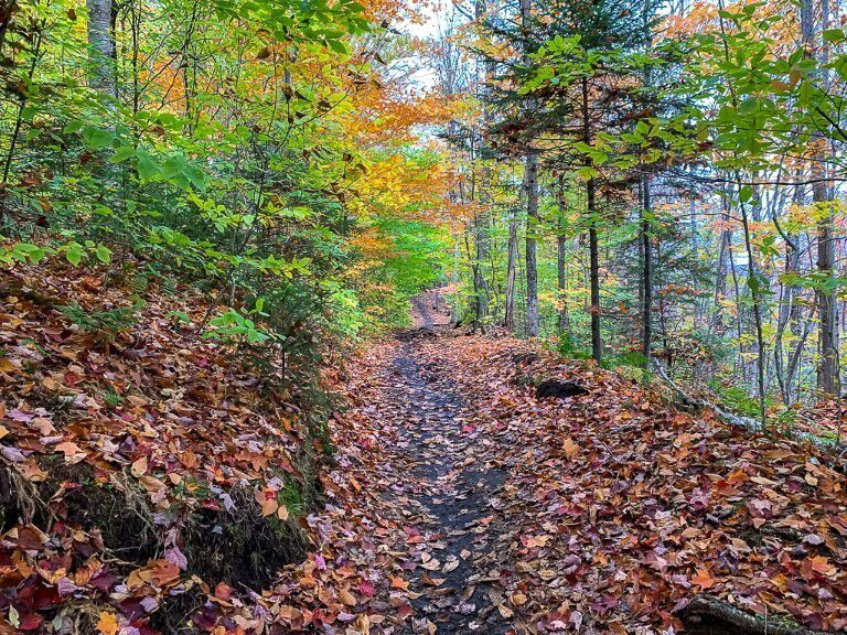 Stunning colors leaves on the ground in a forest trail in adirondack mountains ny
