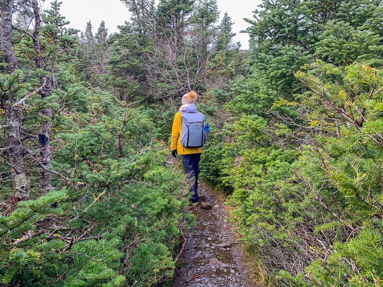 Woman walking through narrow hiking trail surrounded by trees to the summit of mount marcy the highest point in new york