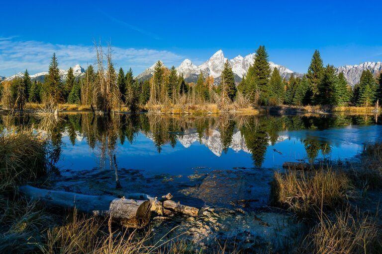 Trees logs and mountains reflecting on deep blue flat river surface
