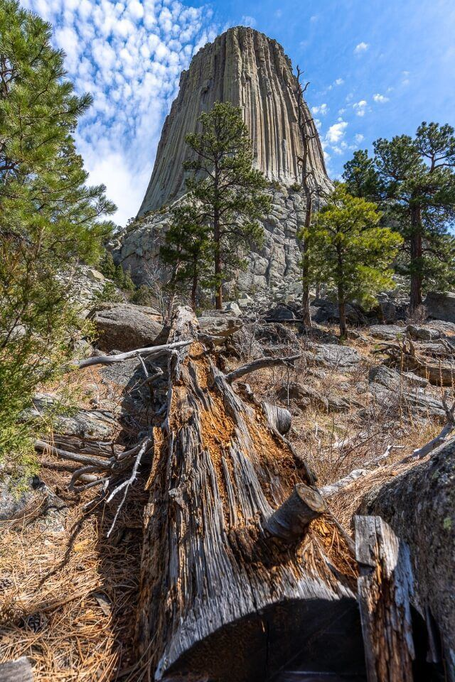 Devils tower from below with a log and green trees blue sky stunning image