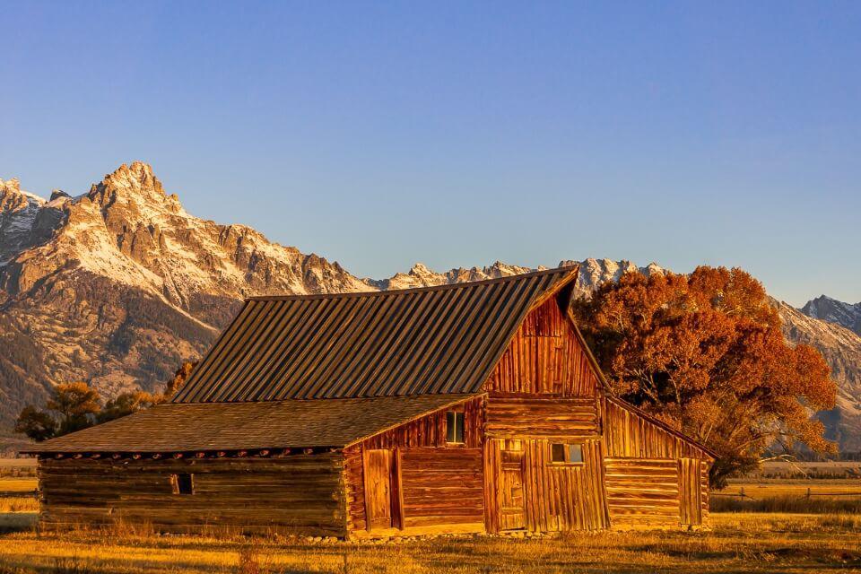 Stunning sunrise at mormon row john moulton barn in grand teton national park wyoming barn trees meadow and mountains