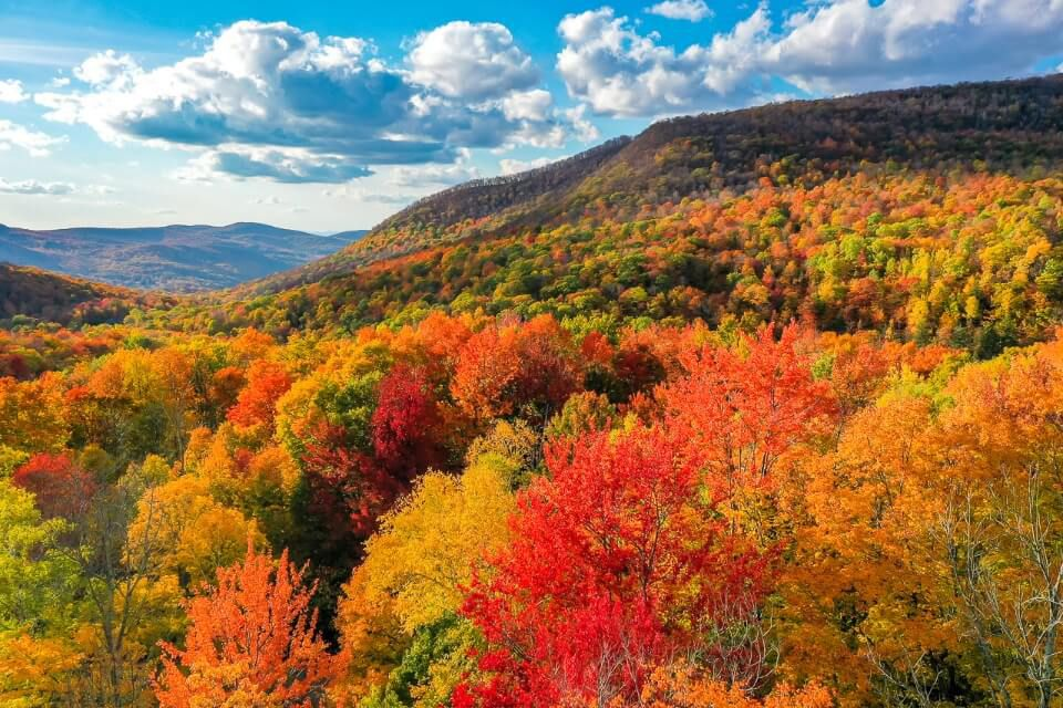 Stunning fall foliage colors rolling hills manchester VT green mountains drone photo where are those morgans