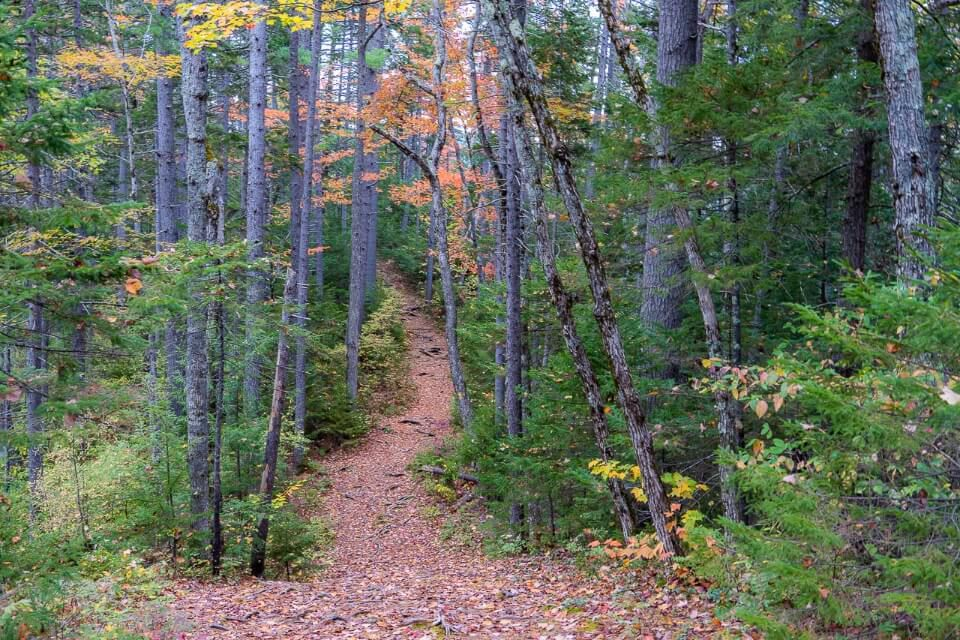 Forest trail with leaves on ground in new england