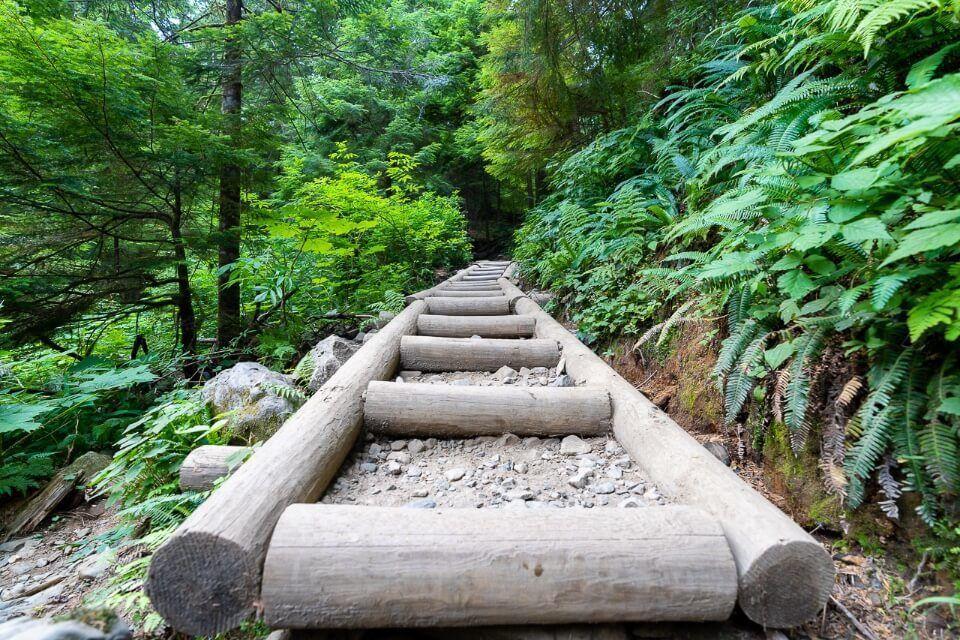 Ladder style wooden boardwalk hiking trail to lake 22 in washington