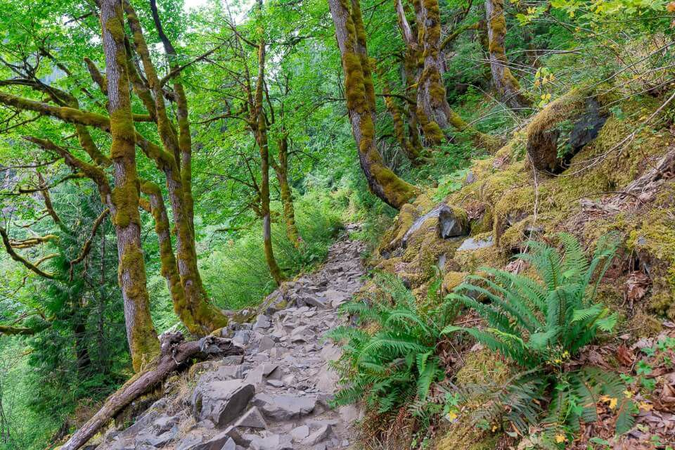 Gorgeous forest hike stone path with trees and green leaves in washington