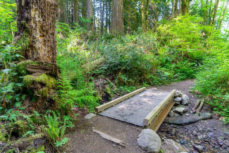 Wooden bridge crossing stream surrounded by green vegetation