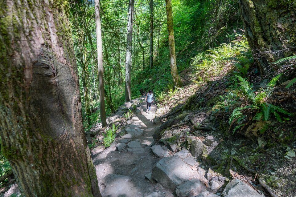 Picturesque hiking trail chirico trail hike to poo poo point in washington forest stone steps