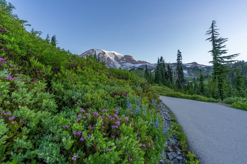 Start of a famous hike in washington with wildflowers
