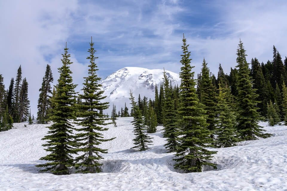 Volcano and trees covered in snow in washington