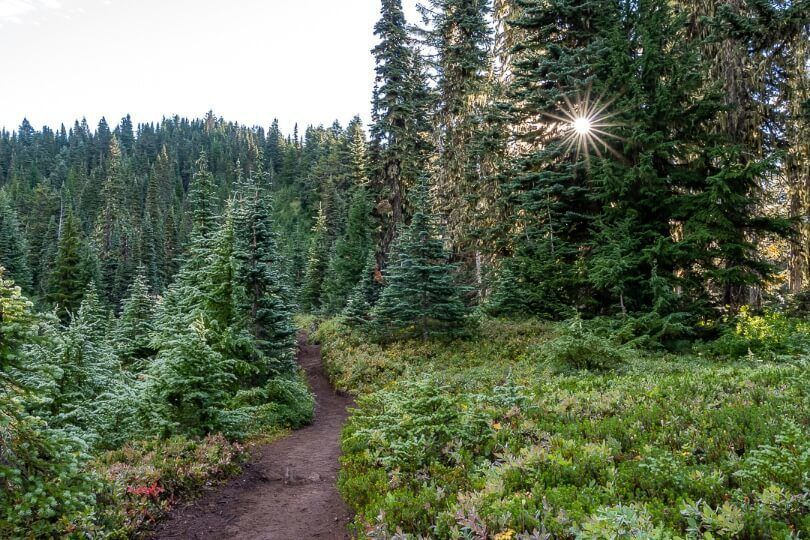 Meadows and lush green trees on tolmie peak trail hike in mt rainier national park