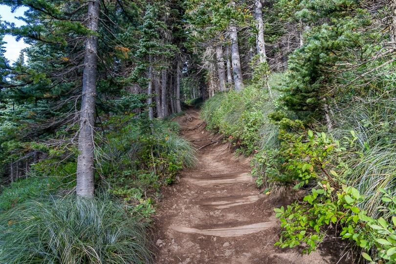 Very steep section of a hike through forest in washington