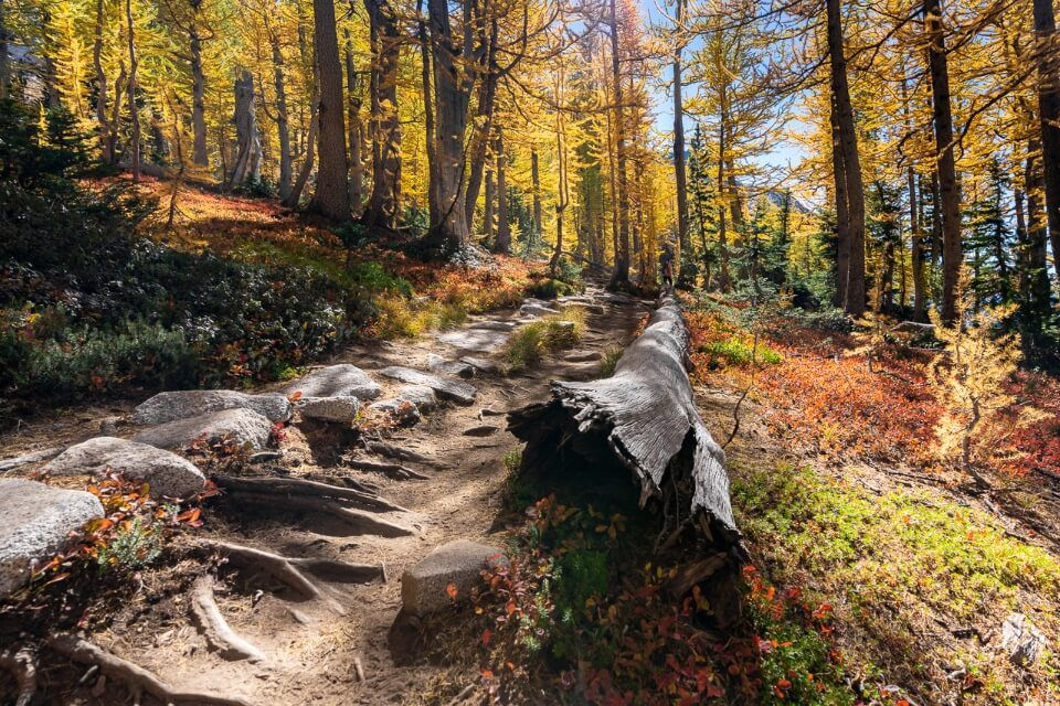 Stunning forest with shadows in washington fall