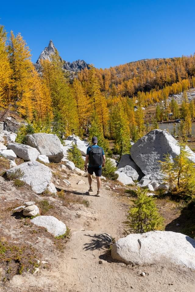 Mark on a gorgeous trail in washington blue sky golden larches