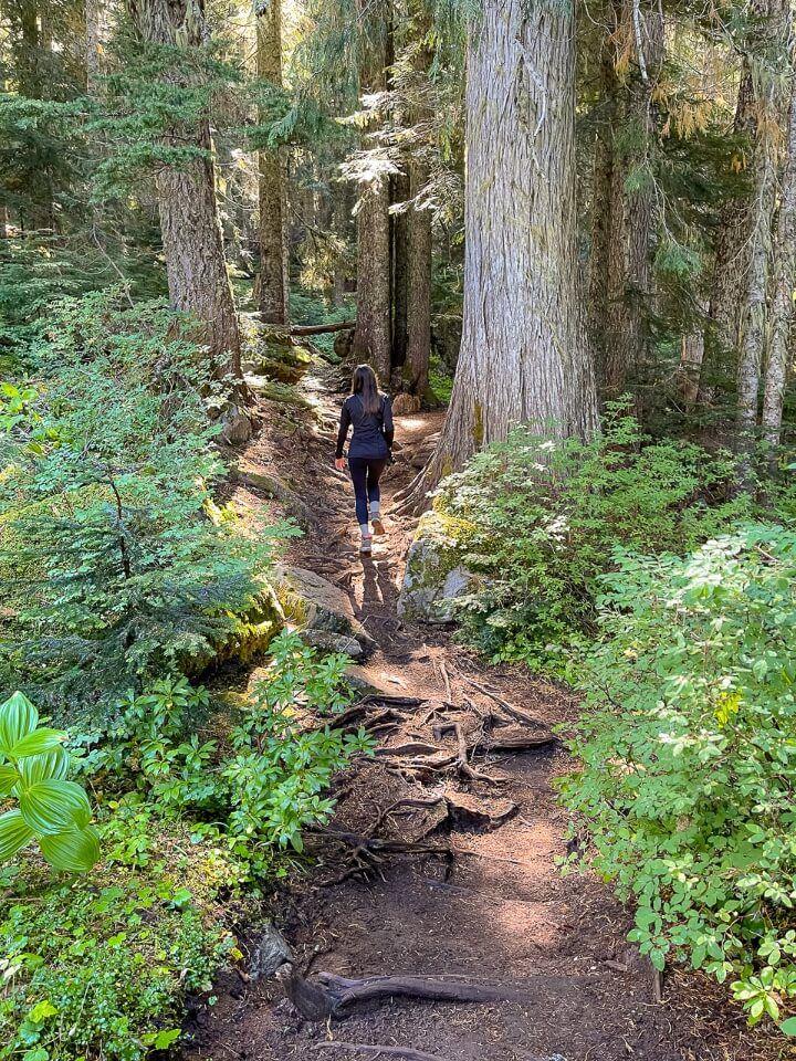 Hiking through forest in washington