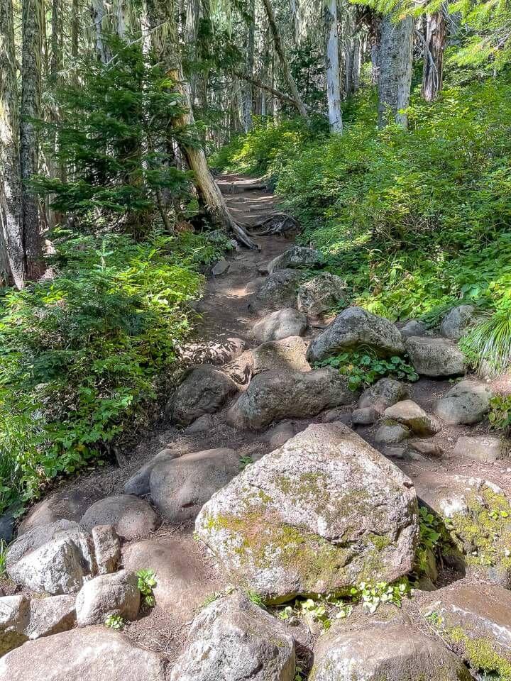 Steep climb through forest on hike in washington
